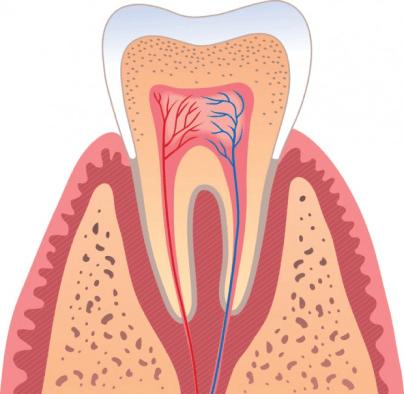 Как выглядит здоровый зуб
